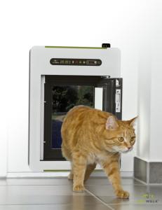 petWALK - cat walks-dunkler